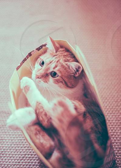 cat pet bag cat in a bag play indoors photo