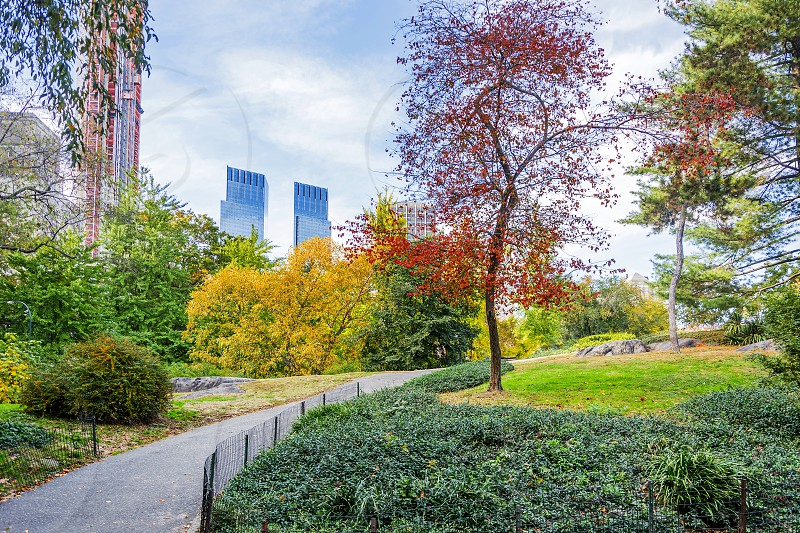 View of Central Park in New York on a beautiful sunny day photo