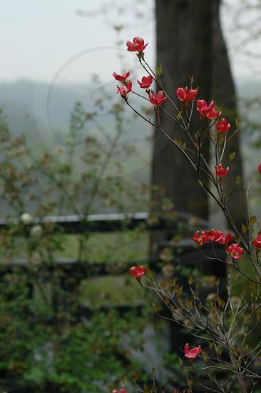 Red flowers. Overlook. Deck. photo