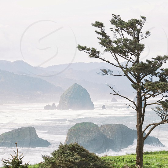 brown withered tree near coast surrounded with mist photo