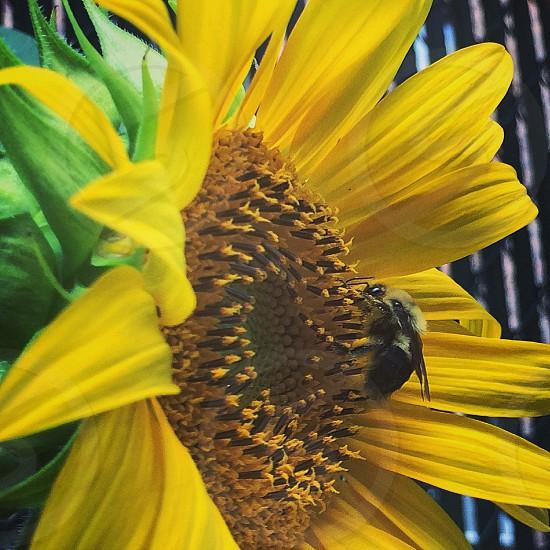 shallow focus of yellow sunflower photo