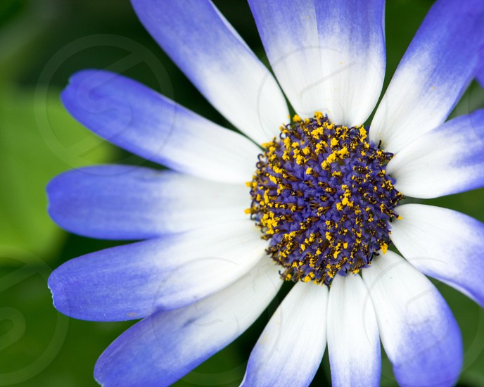 Blue white green macro yellow flower spring bright colorful nature photo