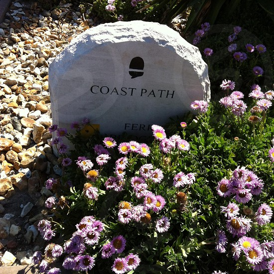 Seaside flowers and a ways stone- sumner in Dorset England by the sea  photo