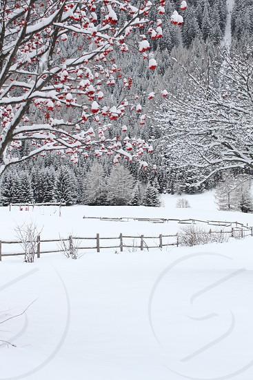 snow filled farm photo photo