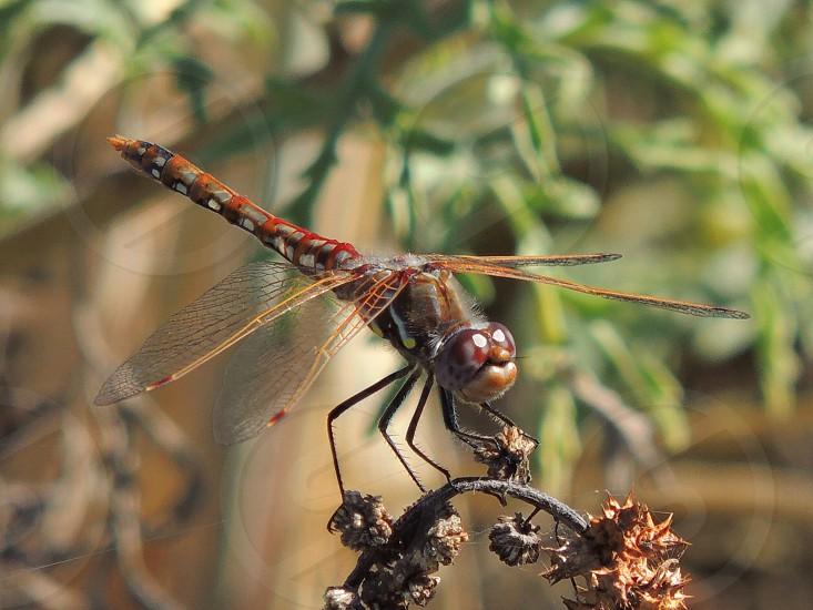 Smiling Summer Bug photo