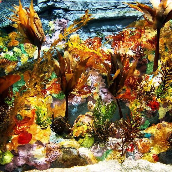 Screensaver Aquarium photo
