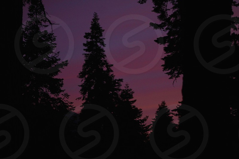 sunset in the pines photo