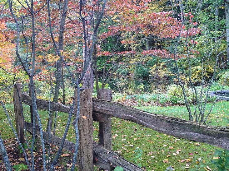 Avalon Nature Preserve nestled in Stony Brook NY photo