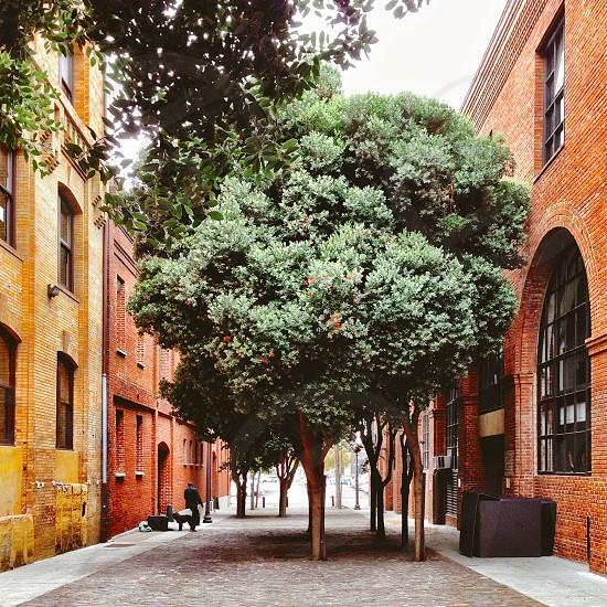 Urban alley San Francisco  photo