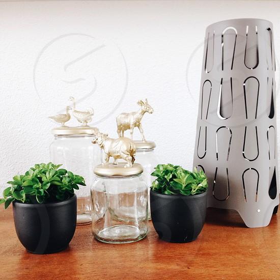 animal lid glass jars photo