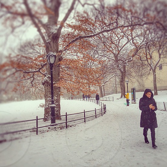 Let it snow! Central Park NYC. photo