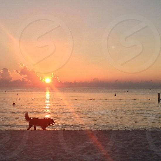 Dog sunset beach sun ocean photo