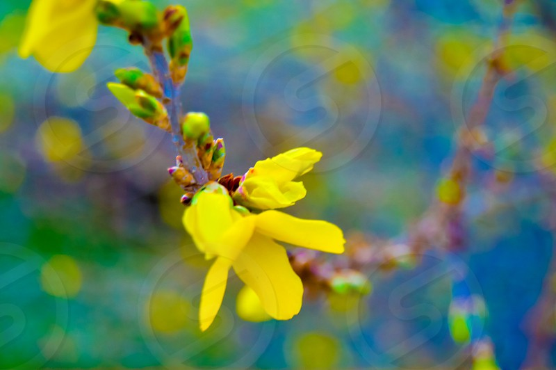 Spring bright beauty nature peace flowers yellow photo