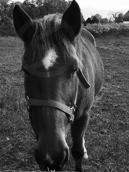 My horse sugar close up photo
