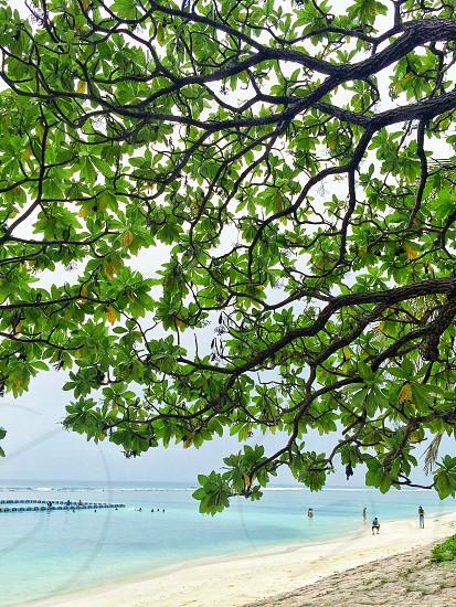 Beach maldives Hulhumale  photo