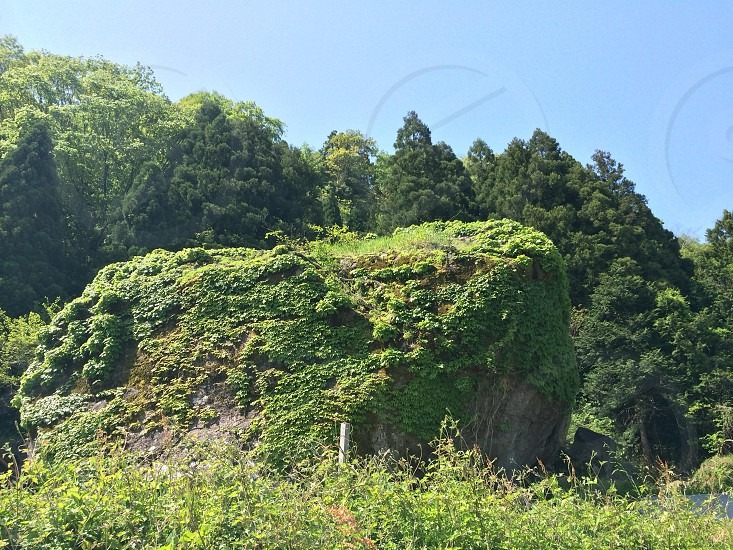 森の入り口の巨大岩(Huge rock in the entrance of the forest) photo