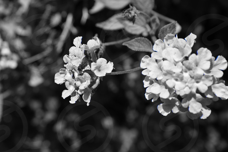 gray scale photo of white petal flower photo