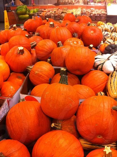 Pumpkins for sale at market.  photo