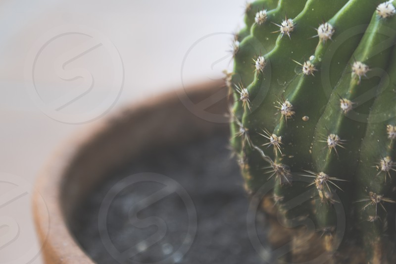 green cactus plant in a terracotta pot photo