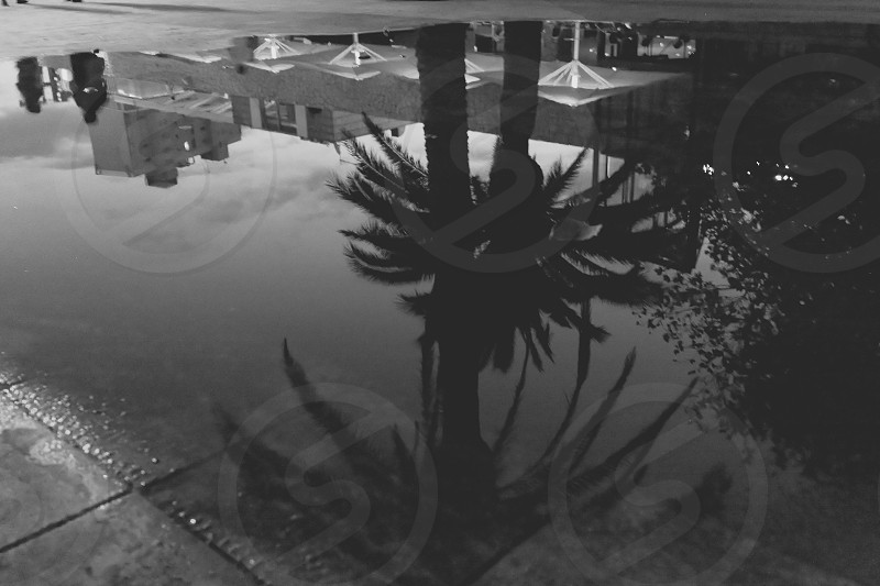 upside down picture of a reflective pool of water and palmtrees photo