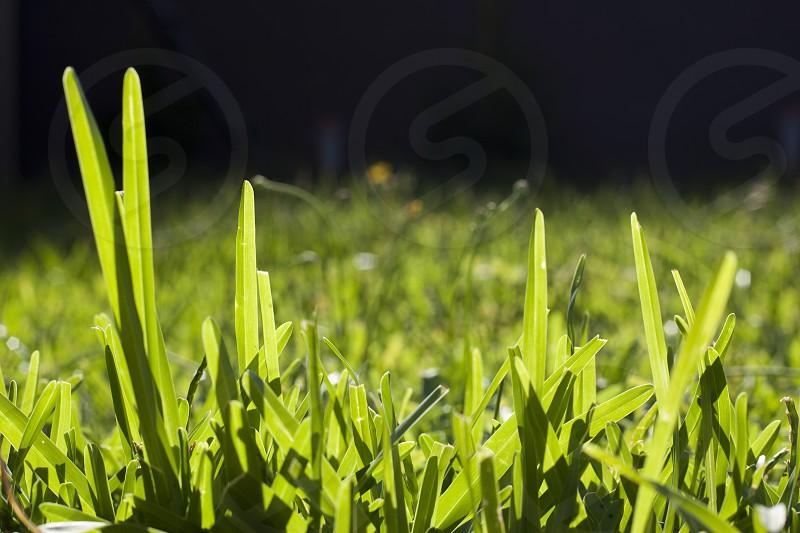 Sunlight hitting grass photo