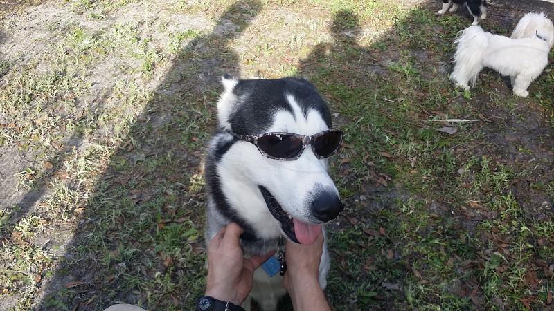 dog shades photo