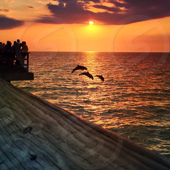 Dolphins in sunset  photo