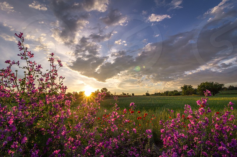 Flowers in the spring fields. photo