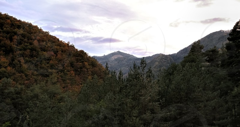 Fall colors in the sunset - Cindrel mountains Paltinis area Romania 1400m photo