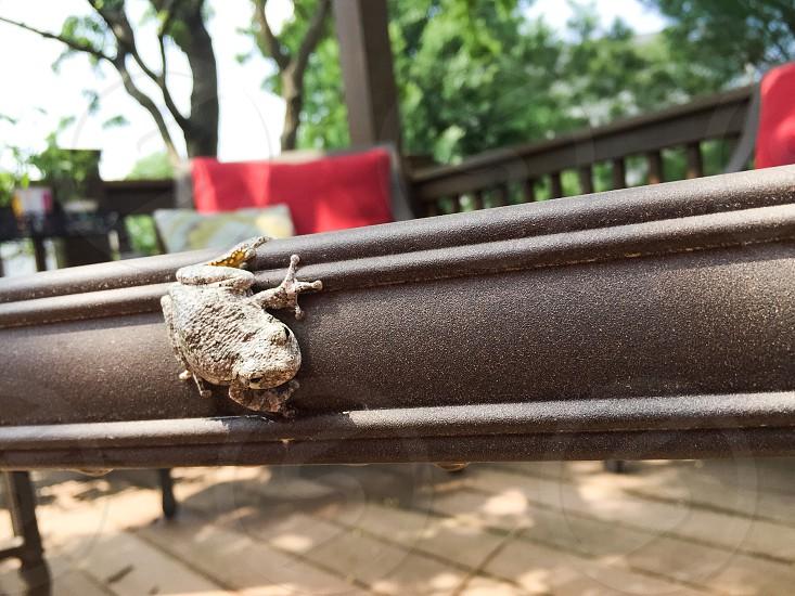 Frog On The Edge photo