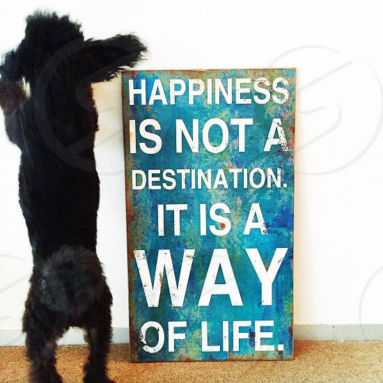 Black poodle and positive message photo
