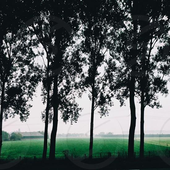 tree silhouetee photo