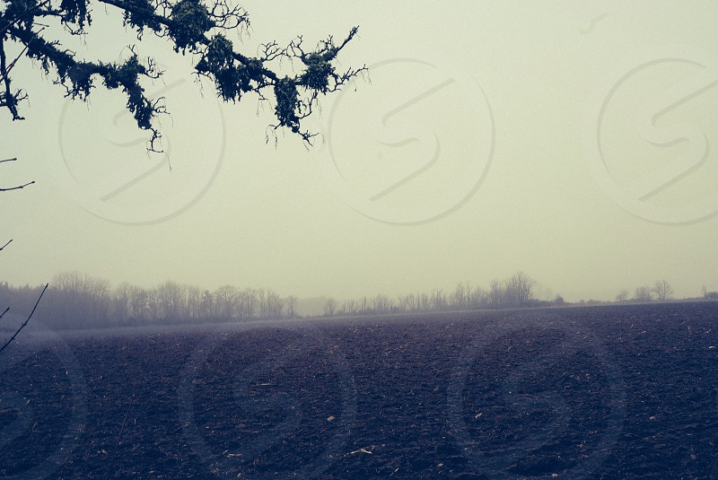 Mystical landscape moss on branches fog mist and plowed land photo