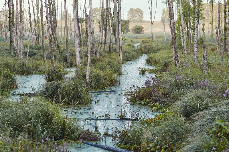 Swamp scenery field trees and grass flooded with water photo