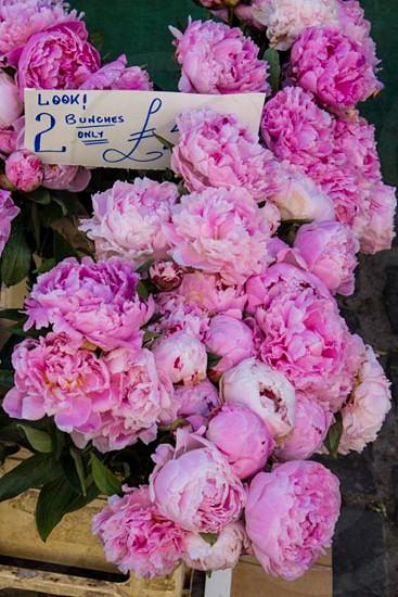 Bath UK flower market photo