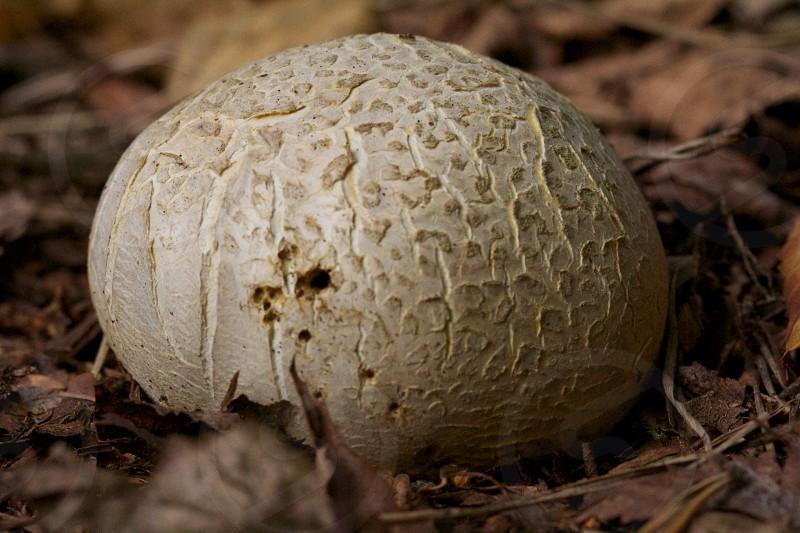 selective focus photography of white mushroom photo