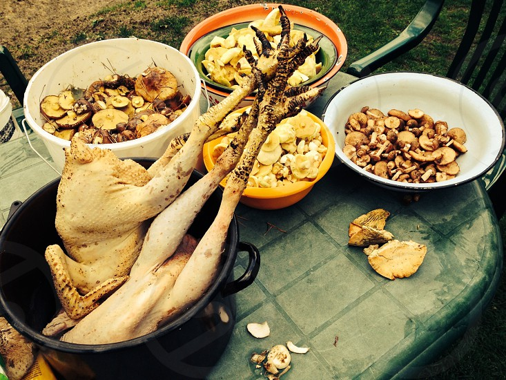A skinned chicken and some freshly picked mushrooms on a table. photo