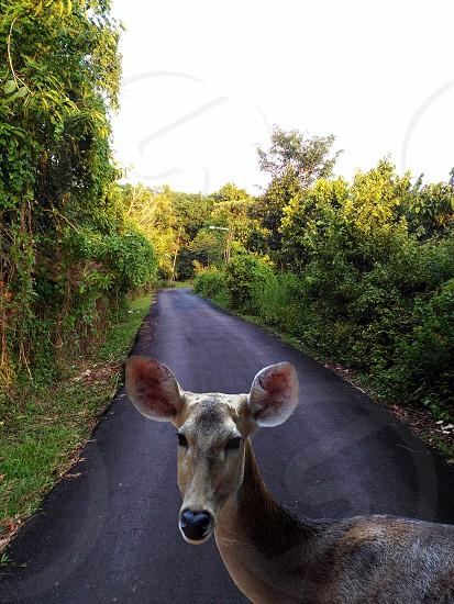 lost deer . photo