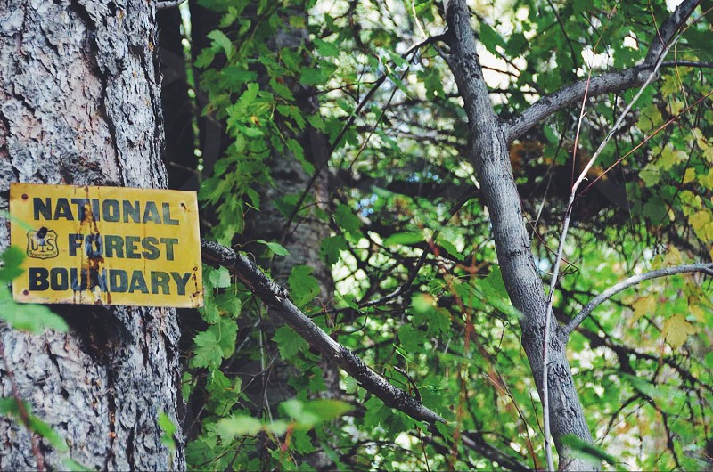 national forest boundary sign on gray tree trunk near green leaves  photo
