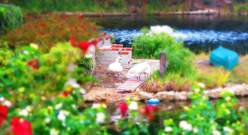 Lake Shire Temple photo