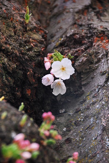 Tiny blossoms in the tree. photo