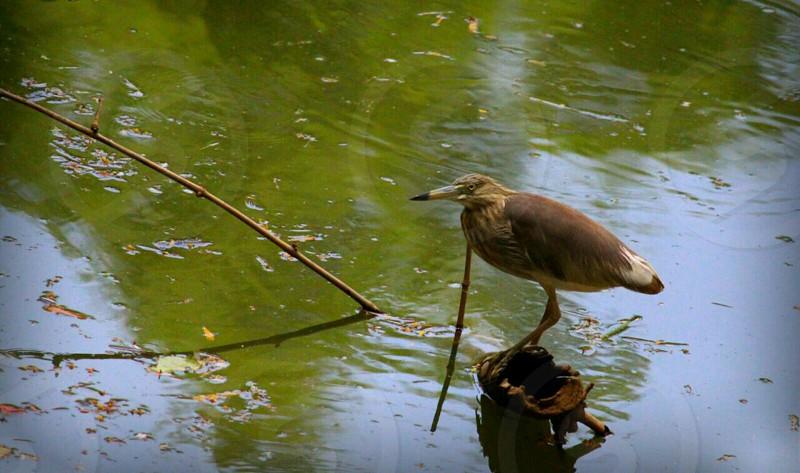bird waiting for prey photo