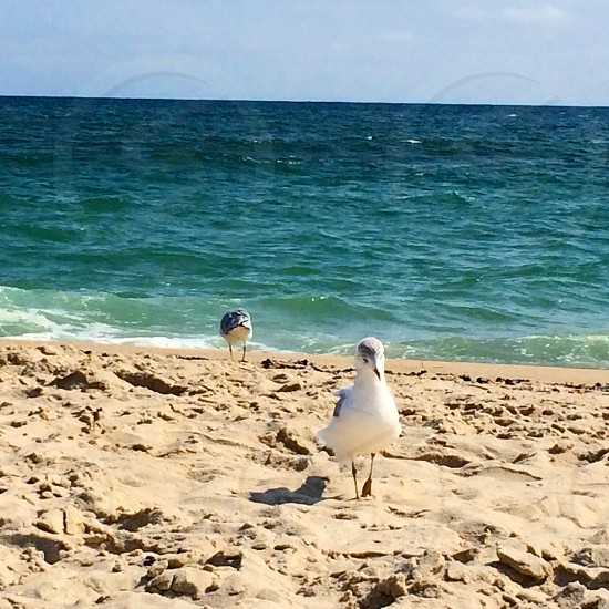 two white birds standing on shore photo