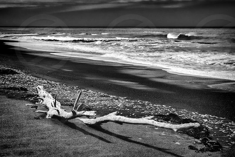 Driftwood on Rarangi Beach photo