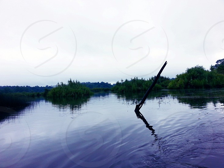 brown wooden stick plunging out from body of water with cumulus clouds above during daytime photo
