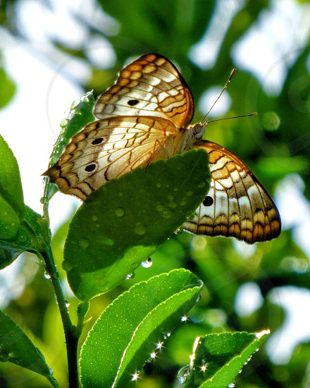 Peacock butterfly butterfly water droplets nature insect photo