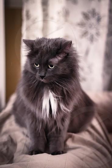 My cat photo