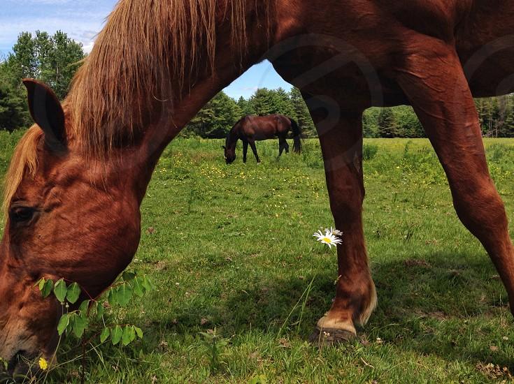 brown horse grazing on grass field photo