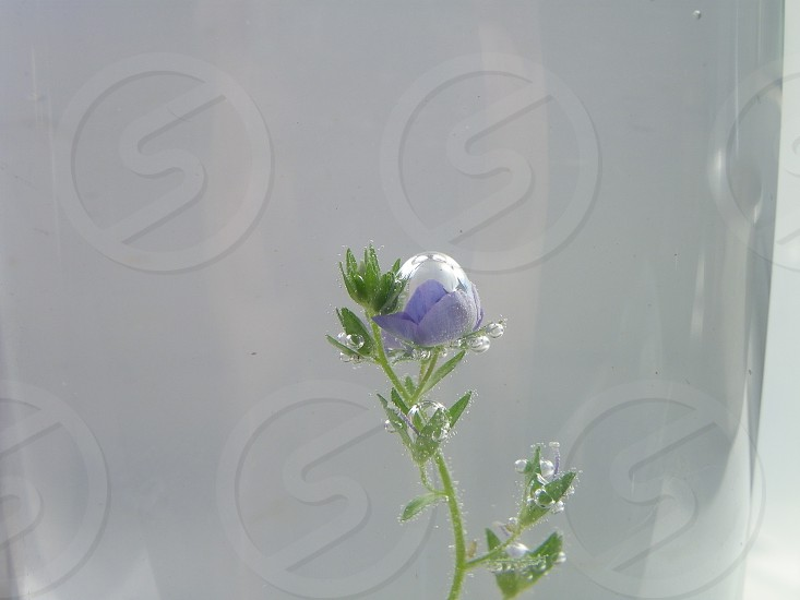 macro bubble on wildflower photo