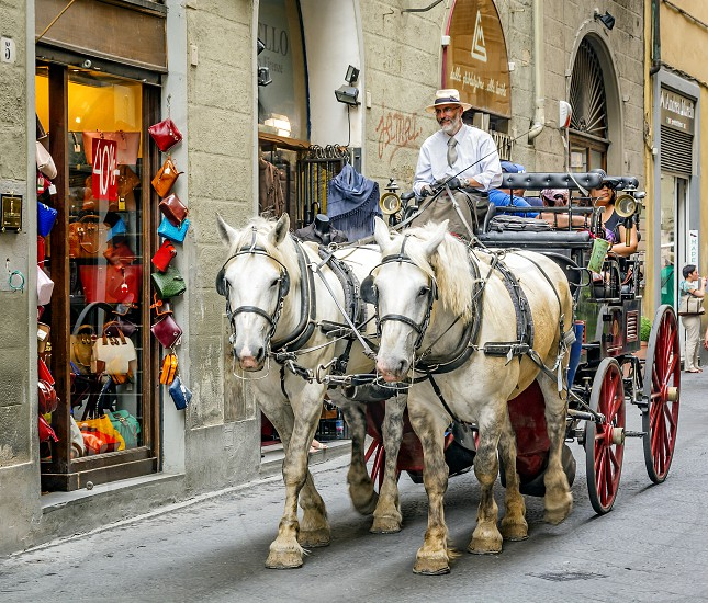 Florence Italy June 2015: carriage drawn by two Percheron white horses with coachman carrying tourists for a ride in the ancient city of Florence Italy photo